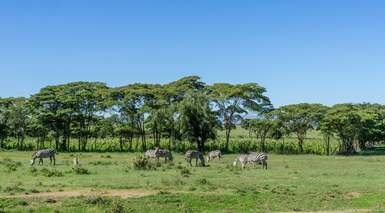 Kenia con 2 Safaris y Visita de Nairobi