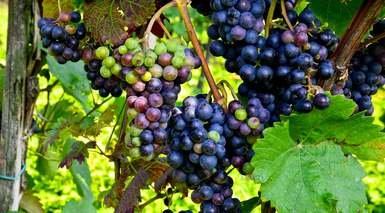 La Rioja: Tierra de Vinos