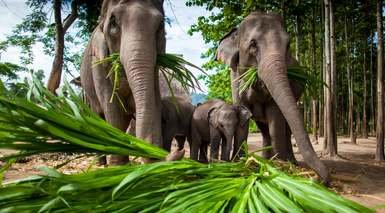Tailandia al Completo con Río Kwai - Rebajas 9%