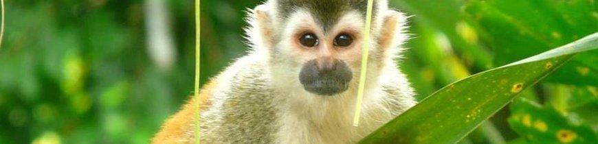 Gran Tour de Costa Rica en 4x4