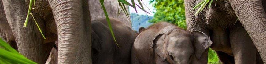 Tailandia al Completo con Río Kwai